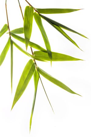 bamboo leafs isolated on white Stock Photo - 3198751