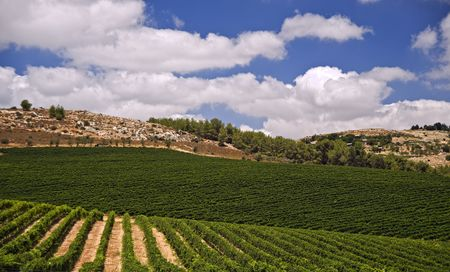 rolling vineyards in the Galilee Israel Stock Photo