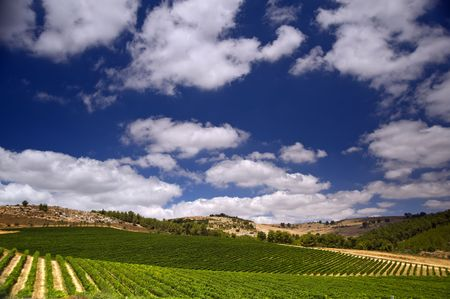 galilee: rolling vineyards in the Galilee Israel Stock Photo