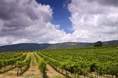 rolling vinyards in the Galilee Israel