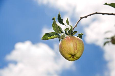 manzana roja en rama en contra de cielo azul