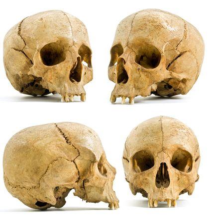 calavera pirata: cuatro �ngeles de cr�neo humano aislado en blanco