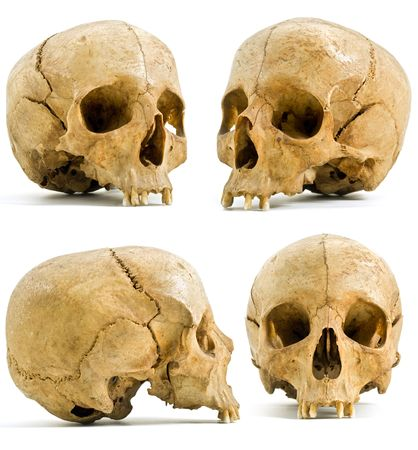 skeleton skull: four angels of human skull isolated on white