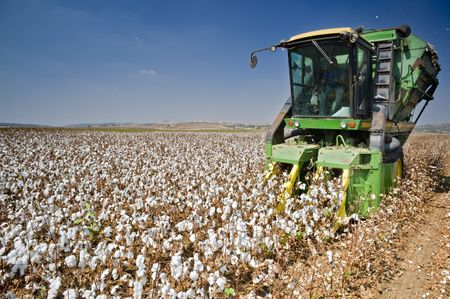 cotton plant: cotton combine harvesting field Stock Photo
