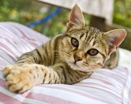whiskar: kitten lying down on a cushion in the garden