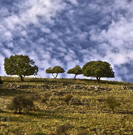 nahal: trees on the ridge in Nahal Amud valley, Galilee, Israel
