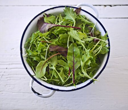 mustard plant: baby salad leaves in an old strainer