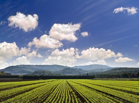 new wheat seedlings in a plowed field in Stock Photo - 4105757