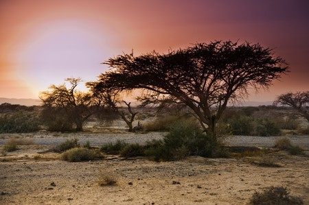 Sunset at the Savannah like Arava in the Negev desert, Israel Stock Photo