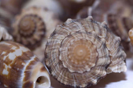 close-up various kinds of sea shells photo