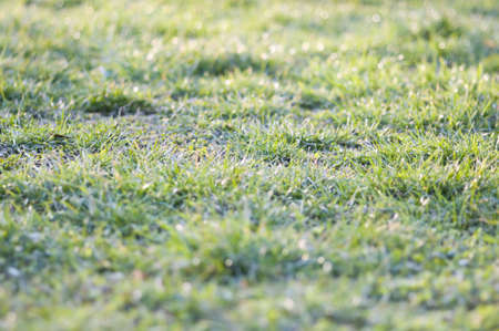 first green grass of the year, beginning of march Stock Photo - 6660071