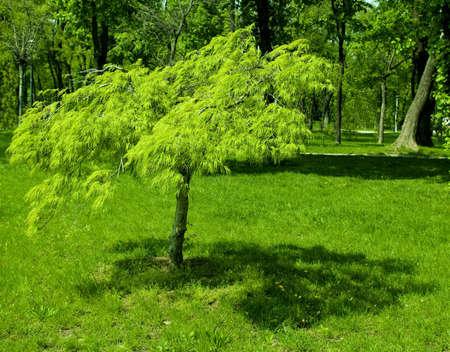 amazingly vibrant green small tree in a park