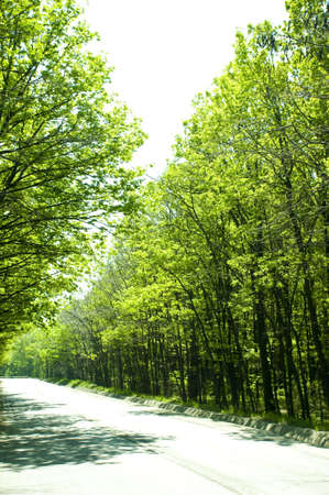 driving through an idyllic forest, in the spring sun