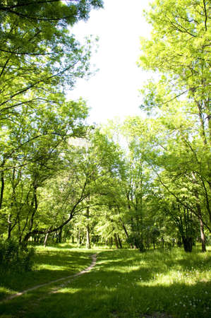 beautiful quiet glade, in the middle of the forest Stock Photo