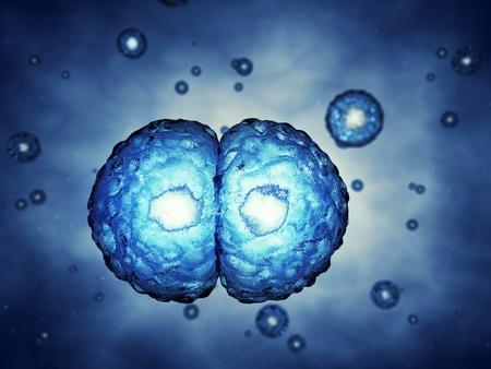 Concepto de la mitosis, ilustraci�n 3d Foto de archivo - 10476710