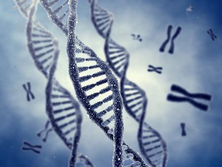 Molécules d'ADN en double hélice et les chromosomes