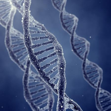 g�n�tique: Mol�cules d'ADN en double h�lice et les chromosomes