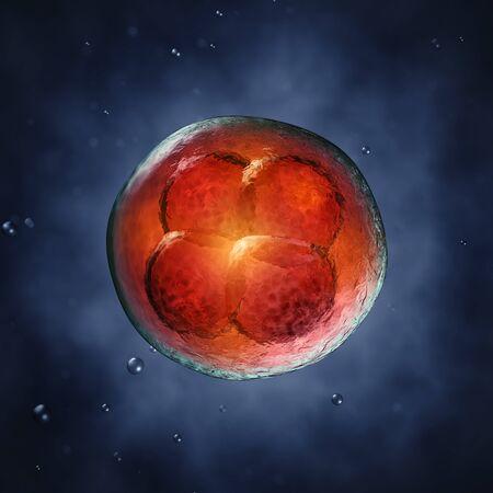 Quatre cellules d'embryon, illustration 3d