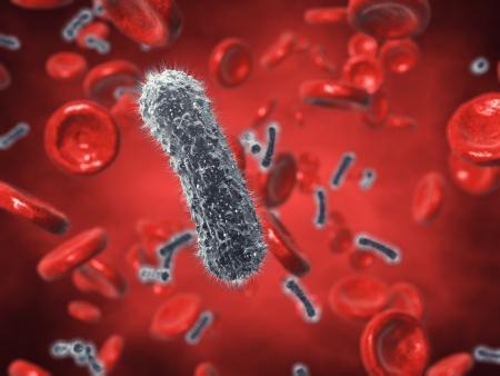 bacterias: Las bacterias y las c�lulas rojas de la sangre, la sangre contaminada