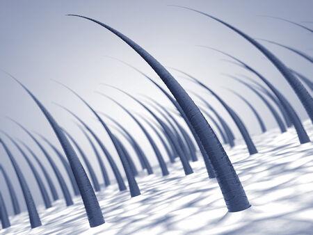 Le cuir chevelu et les cheveux humains brins, illustration détaillée