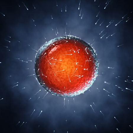Los espermatozoides fertilizar un óvulo