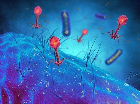 Virus bactériophages infectant les cellules bactériennes, les virus bactériens