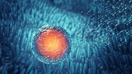 celulas humanas: Espermatozoides fertilizar un �vulo Concepci�n celular Fertilizaci�n Foto de archivo
