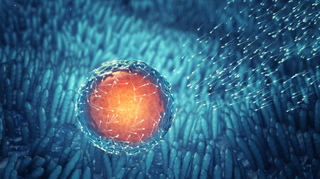 Les spermatozoïdes féconder un ovule Conception cellulaire Fécondation