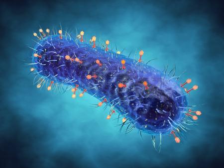 virus organism: Bacteriophage viruses infecting bacterial cells , Bacterial viruses