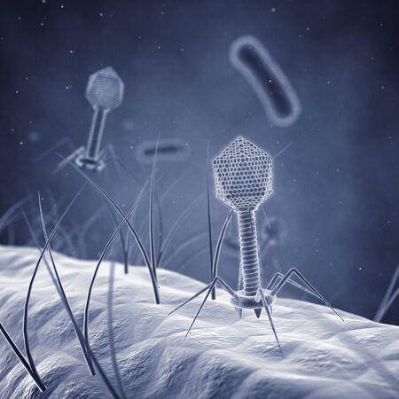 virus cell: Bacteriophage viruses infecting bacterial cells , Bacterial viruses