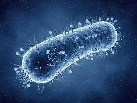 Bacteriophage viruses infecting bacterial cells , Bacterial viruses