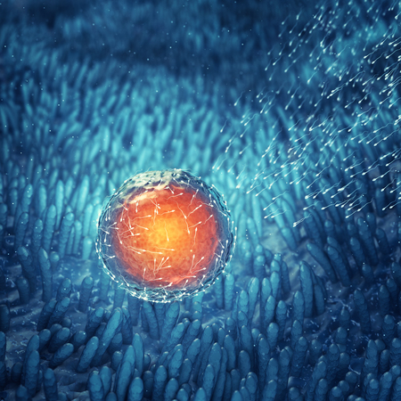 sperm cell: Sperm cells fertilizing an egg cell , Conception , Fertilization Stock Photo