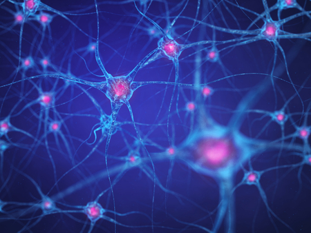 Neuronales Netz, Gehirnzellen, Menschliches Nervensystem, Neurons Standard-Bild