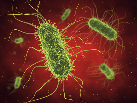 bacteria cell: Bacteria , Infected blood , Germs , Epidemic bacterial disease Stock Photo
