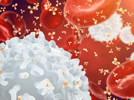 human immune system: White , red blood cells and antibodies , Leukocytes , Infectious disease , Immune system Stock Photo