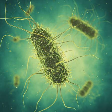la bactérie Salmonella, infection Germ, maladie bactérienne sur l'épidémie Banque d'images