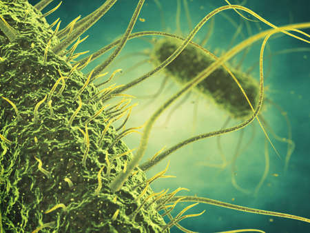 infection: Salmonella bacteria , Germ infection , Epidemic bacterial disease Stock Photo
