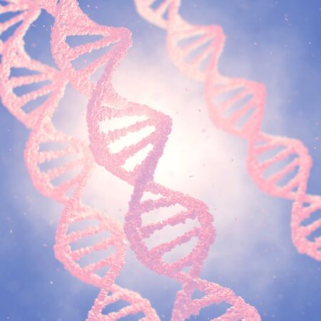 replication: Dna double helix molecules and chromosomes , Genetic engineering
