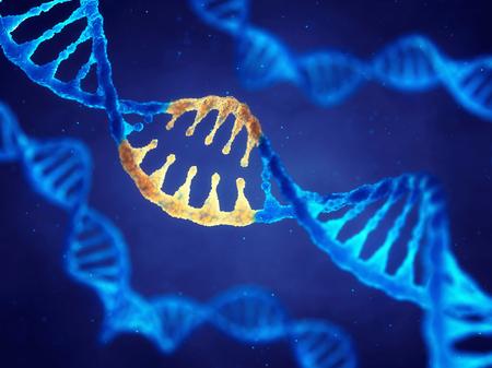 cromosoma: Molécula de ADN de doble hélice con genes modificados, Corregir la mutación por ingeniería genética