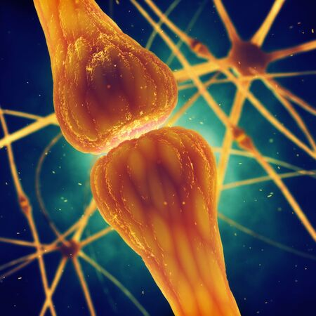 impulse: Synaptic transmission is the biological process by which neurotransmitters are released by a neuron and activate the receptors of another neuron , muscle or secretory cell , Human brain nerve cells structure Stock Photo
