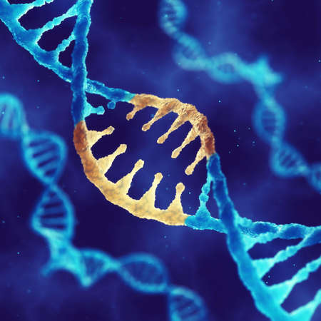 polymer: Double helix DNA molecule with modified genes , Correcting mutation by genetic engineering