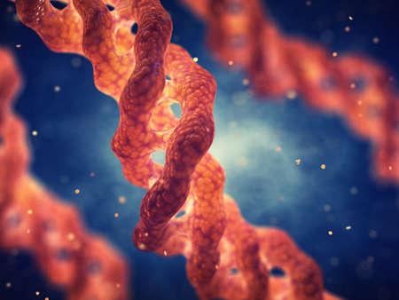 Cząsteczka potrójnej helisy kolagenu, kolagen jest głównym składnikiem tkanki łącznej