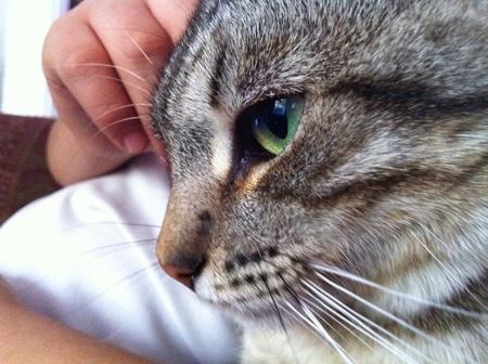 eye: Beautiful cat thinking
