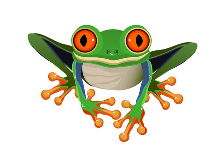 rood Eyed Tree Frog