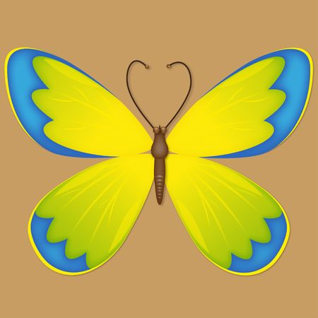 an illustration of butterfly for your design project. illustration