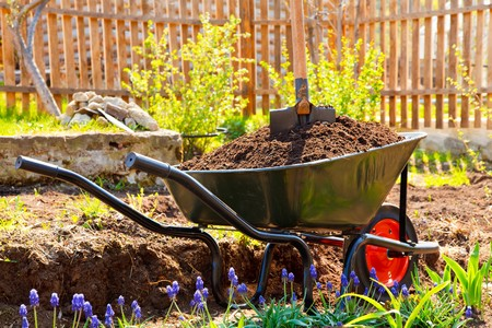 Wheelbarrow full of soil in a garden photo