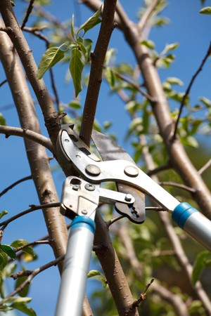 pruning scissors: Somebody trimming a tree branch.