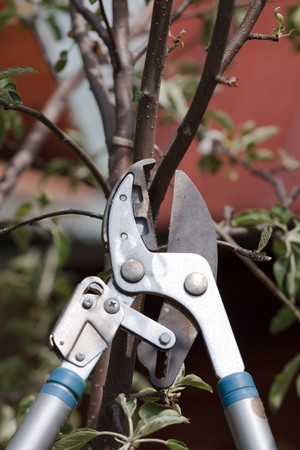 pruning scissors: Trimming a tree twig