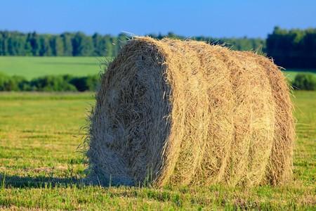 rick: A rick of straw. Stock Photo