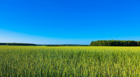 Green field under the bright blue sky. photo